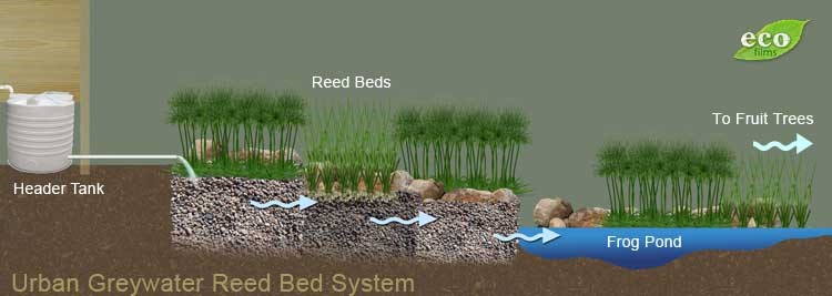 reed beds in permaculture systems