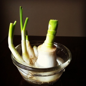 Re-growing Leek