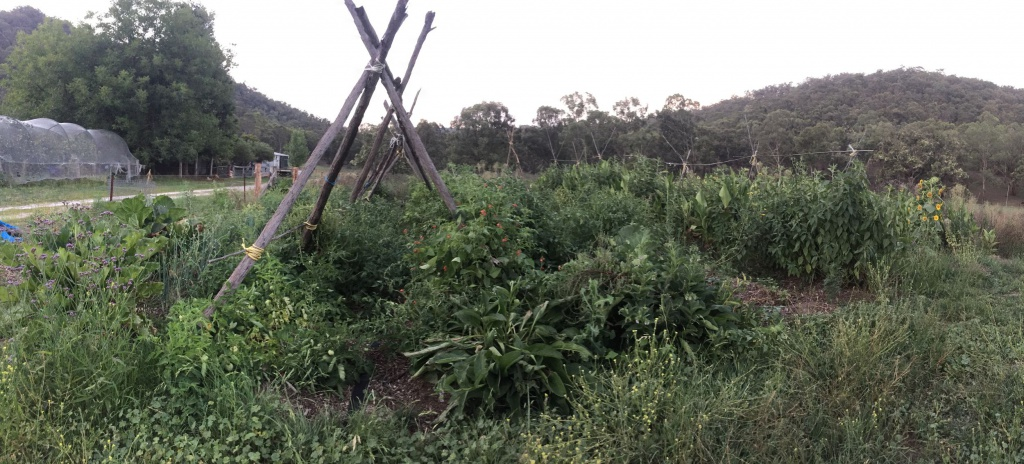 Adon's Veggie Garden