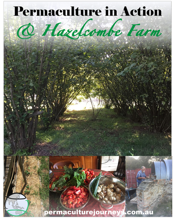 Permaculture In Action at: Hazelcombe Farm