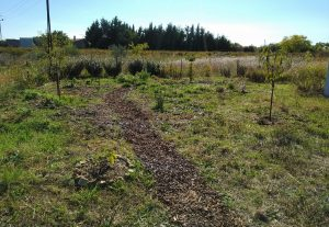 How to establish a Food Forest